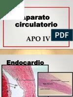 Circulatorio Hp