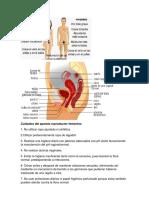 Cuidados del aparato reproductor femenino.docx