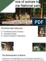 estela balcazar - project wolves n yellowstone
