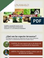 ESPECIES INVASORAS PPT