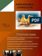 Ameliorarea animalelor