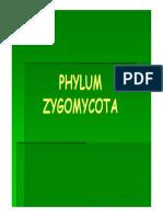 ZYGOMYCETES.pdf
