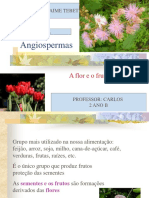 Angiospermas Fisiologia e Anatomia