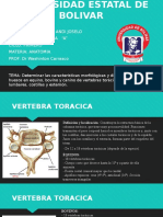 Presensatcion Anatomia