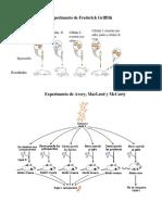 Experimentos ADN Portador de La Informacion Genetica