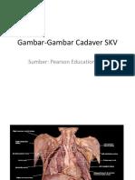 GambarGambar Cadaver SKV