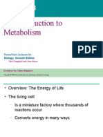 Ppt Ch 5 Metabolism