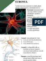 Fiziologie Neuron Si Celula Musculara