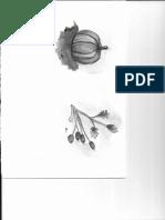 Escanear 2017-10-8 0008.pdf