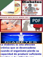 Diabetes Bases Molecularsnuevo