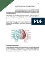 El Cerebro Hemisferios