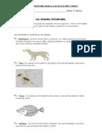 Guia de Ciencias Veretbrados e Invertebrados.
