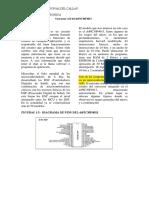 Conversor AD Del DsPIC30F4013