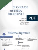 Embriologia de Sistema Digestivo