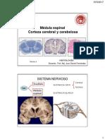 médula y cortezas 2018.pdf