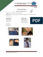 Informevi Clulasvegetales 140122220558 Phpapp01