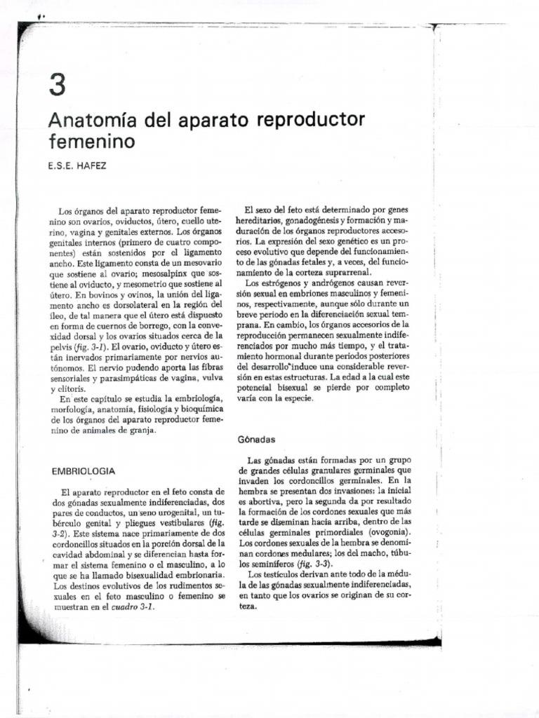Anatomia Del Aparato Reproductor Femenino