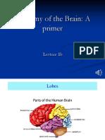 Anatomy of the Brain a Primer