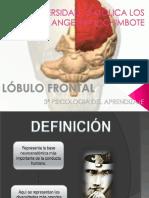 lobulofrontal-131113144714-phpapp01.pptx