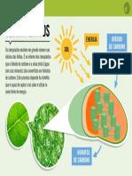 Cloroplastos.pdf