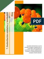 95725761 7 1 Fosforilacion Oxidativa y Fotosforilacion