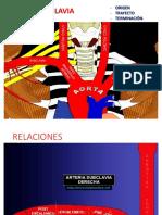 Arteria Subclavia Vena Yugular Interna y Conducto Toraxico