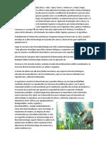 A Biotecnología