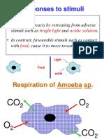 Responses to Stimuli of Amoeba