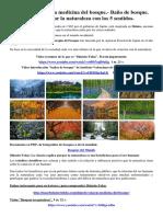0135-shinrin-yoku.pdf