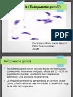 Simulador 19 Toxoplasmosis
