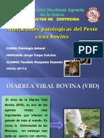 PATOLOGIA-PESTEVIRUS-BOVINO.pptx