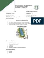 Bacteria Brando