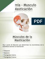 anatomamusculodelamasticacin-130130205834-phpapp02