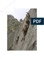 Death-Defying Mountain Goats Are Seen Climbing the Steep Dam Wall in Italy's Gran Paradiso National Park.