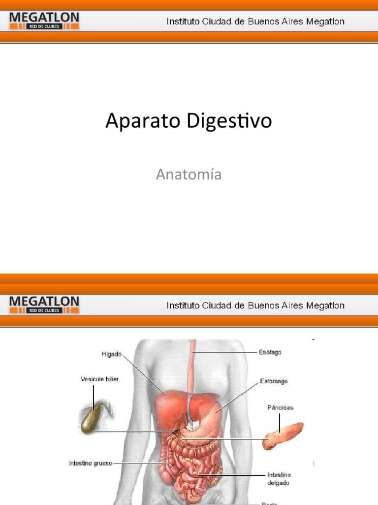 Aparato Digestivo Anatomía Clase