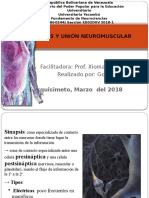 Sinapsis Union Neuromuscular