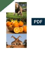 Información Nutricional Del Hongo Ostra