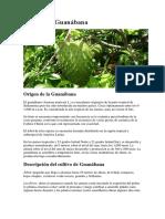 Cultivo de Guanábana