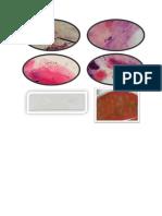 Microbiología Fotos
