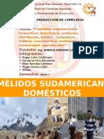 327922773-CAMELIDOS-DOMESTICOS.pdf