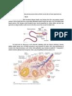 Fertilisasi.docx