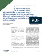 La medición y vigilancias de la enfermedad de la mancha foliar producida por la sigatoka negra