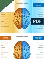 1267 Brain Comparison Left Right Sides