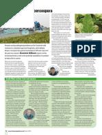 Farmers Guide Article - Cercospora
