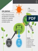 Fotossintese nas plantas.pdf