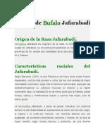 Raza de Bufalo