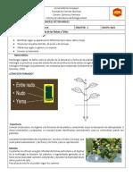 Informe de Botanica Numero 2- Copia (3)