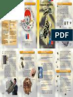 vespula_germanica.pdf