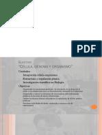 desarrollo y genes hox.pptx