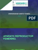 1.- Femenino embrio